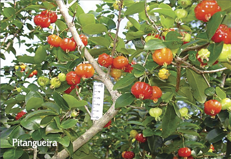 Tolerância à dessecação em sementes da flora brasileira
