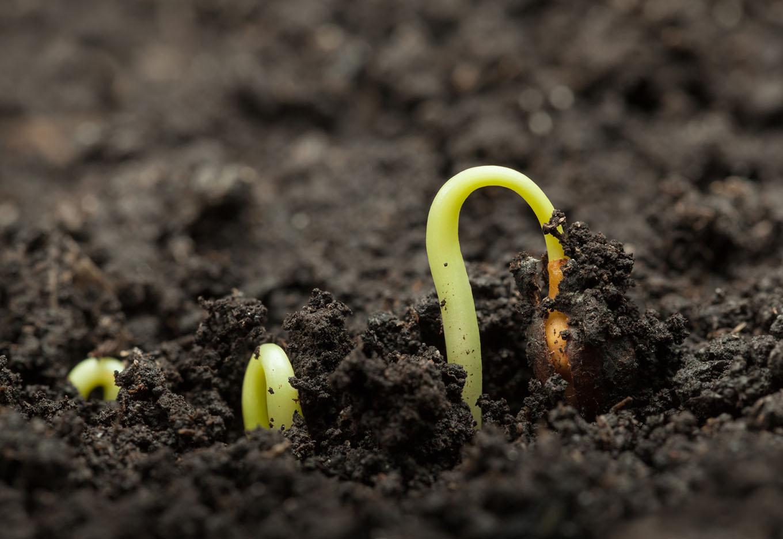 Para que serve o vigor de sementes?