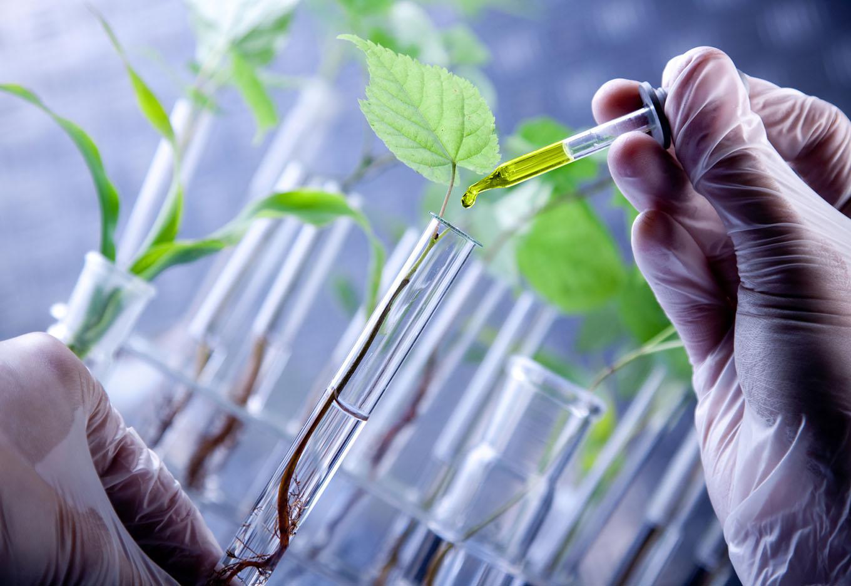 Será o uso do RNAi a base dos defensivos agrícolas do futuro?